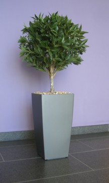 artificial bay tree in Solihul