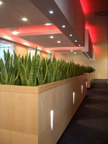 modern office interior with planting as part of the furniture