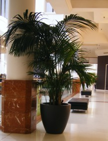 shopping centre plant display with palm