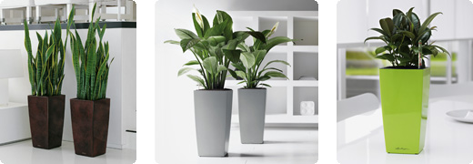 office plant displays. Lechuza Delta Office Plant Displays L
