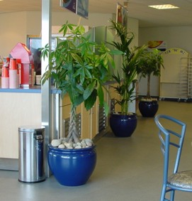 Tropical plant displays in a cafe in West Midlands