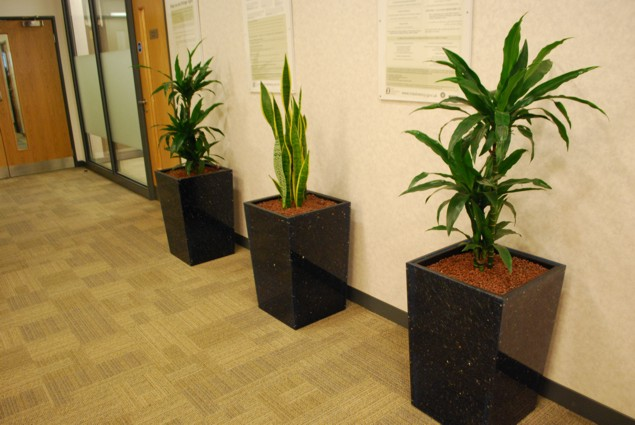 office plant displays made from recycled cd's and cd cases